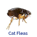 Advance Tech Pest Control Cat Flea