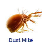 Advance Tech Pest Control Dust Mite