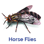 Advance Tech Pest Control Horse Flies