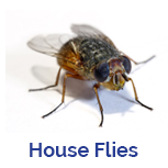 Advance Tech Pest Control House Flies