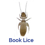 Advance Tech Pest Control Lice