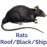 Advance Tech Pest Control Roof Black Ship Rap