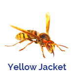 Advance Tech Pest Control Yellow Jacket
